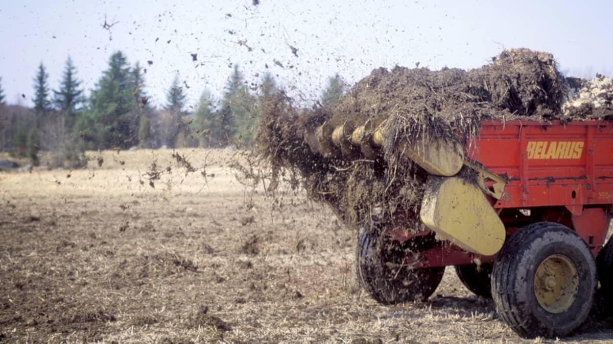 Lantaa levitetään pellolle traktorin vetämällä koneella.