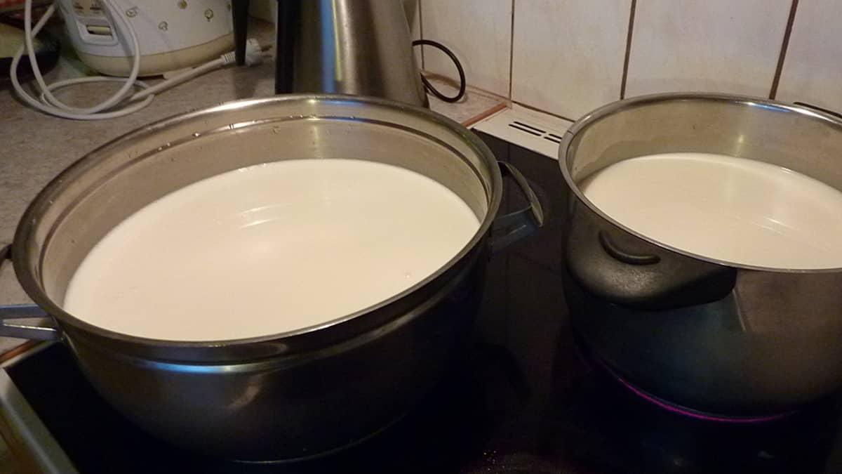 Juustoleipää varten maito lämmitetään lypsylämpimäksi.