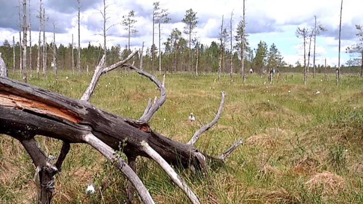 Hankasuon maisemaa Uuraisilta.