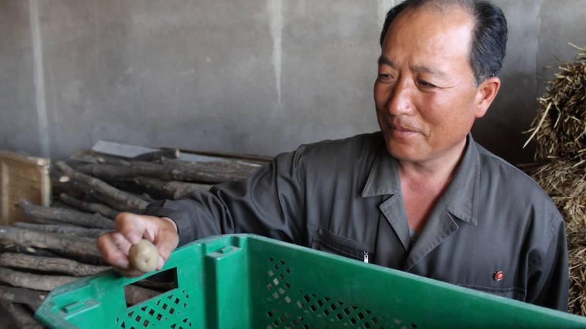 Siemenperunaa Pohjois-Korea