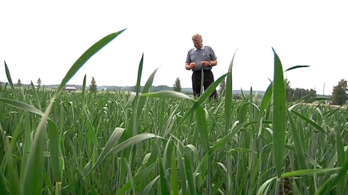 Maanviljelijä pellollansa.