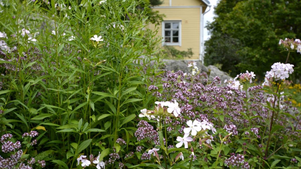 Lahden kasvipankki Anttilanmäessä