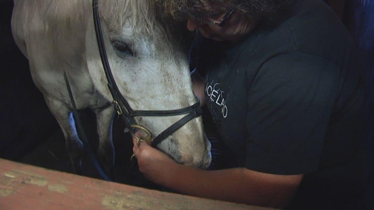 Eu-direktiivi tuo lisää vaatimuksia hevostallien koolle.