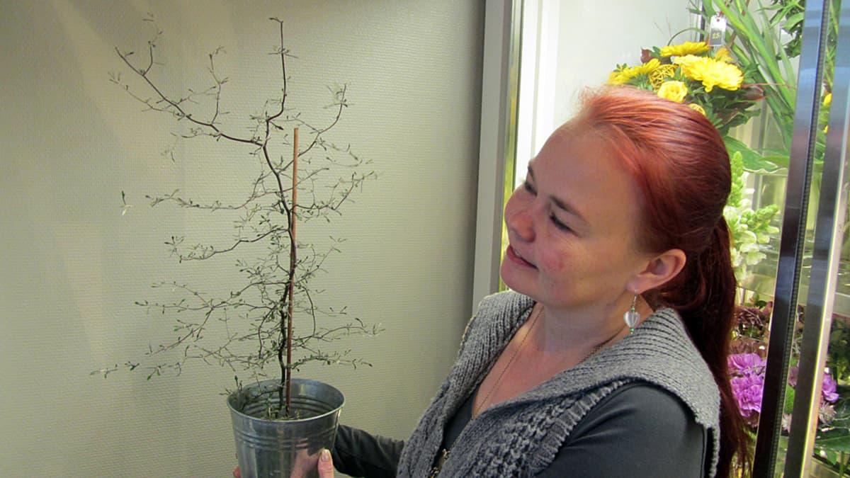 Kukkakauppias esittelee kummituspuuta