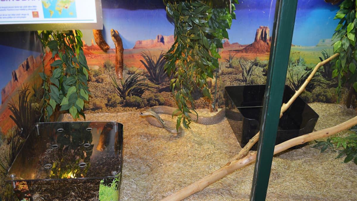 Käärme terraariossa matelijanäyttelyssä.