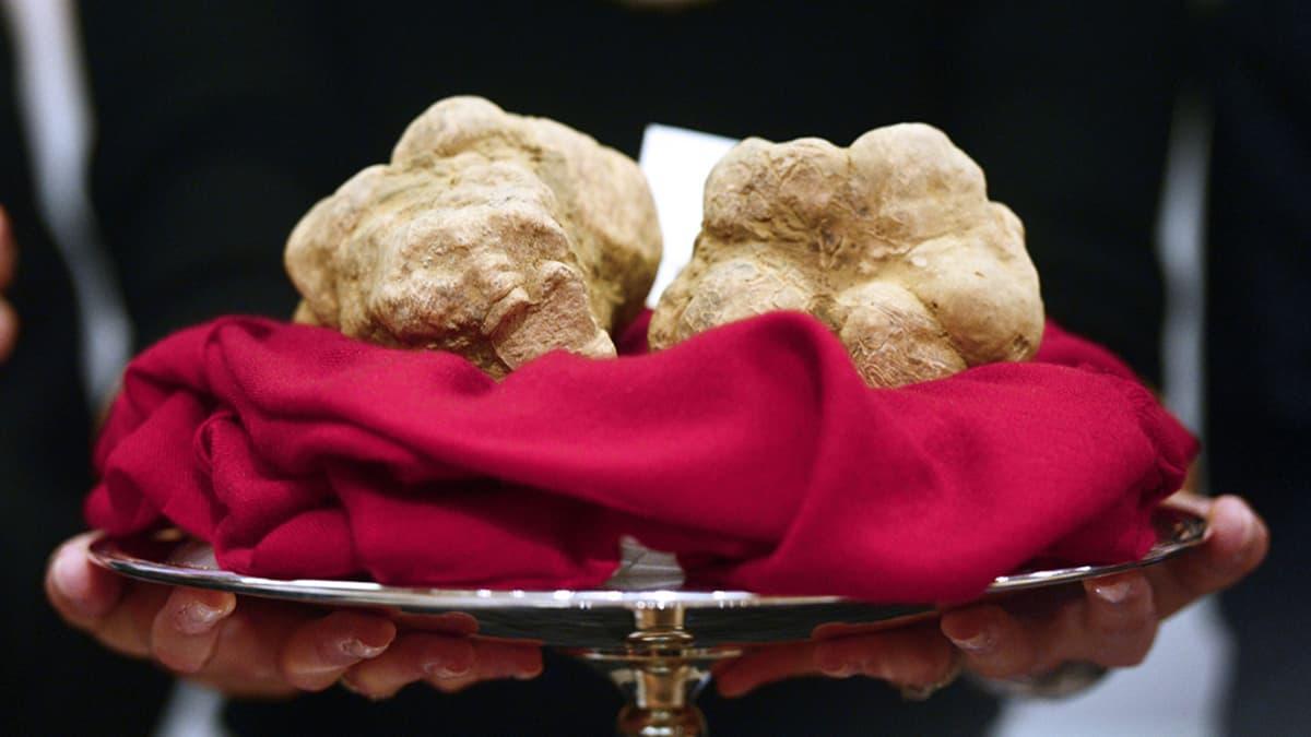 Kaksi valkoista tryffeliä yhteispainoltaan 950 grammaa myytiin 90 000 eurolla kiinalaismiehelle.