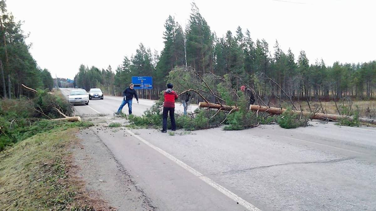 Tielle kaatuneita puita raivataan Pieksämäellä.