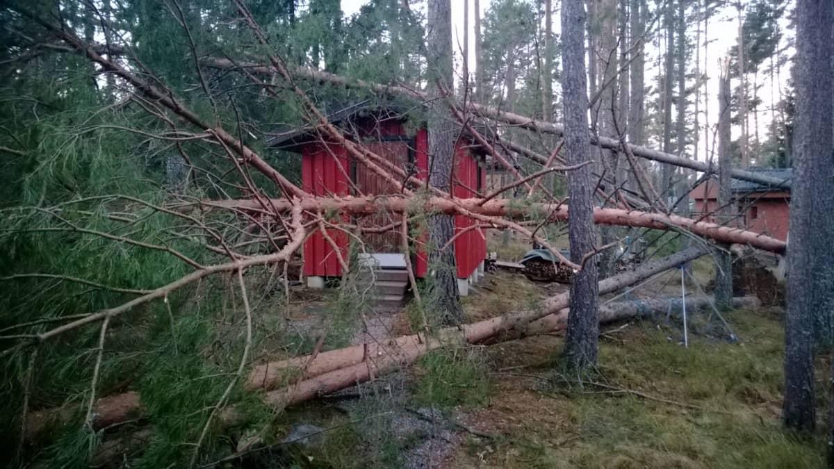 Myrskyvaurioita