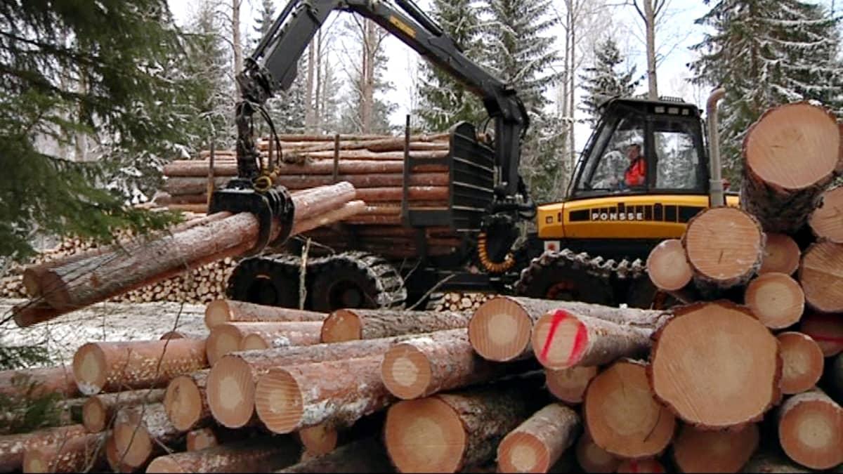 Metsäkone nostaa tukkeja.