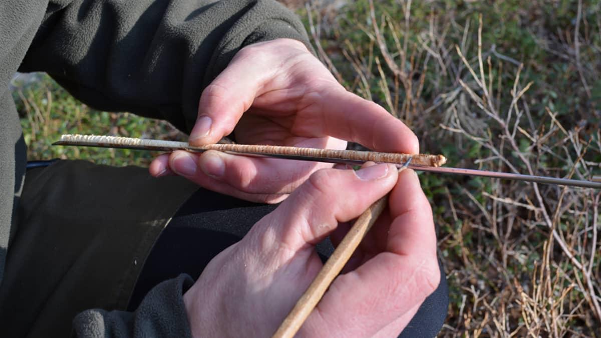 Mies laskee lyijykynän avulla lustosta männyn vuosirenkaita.