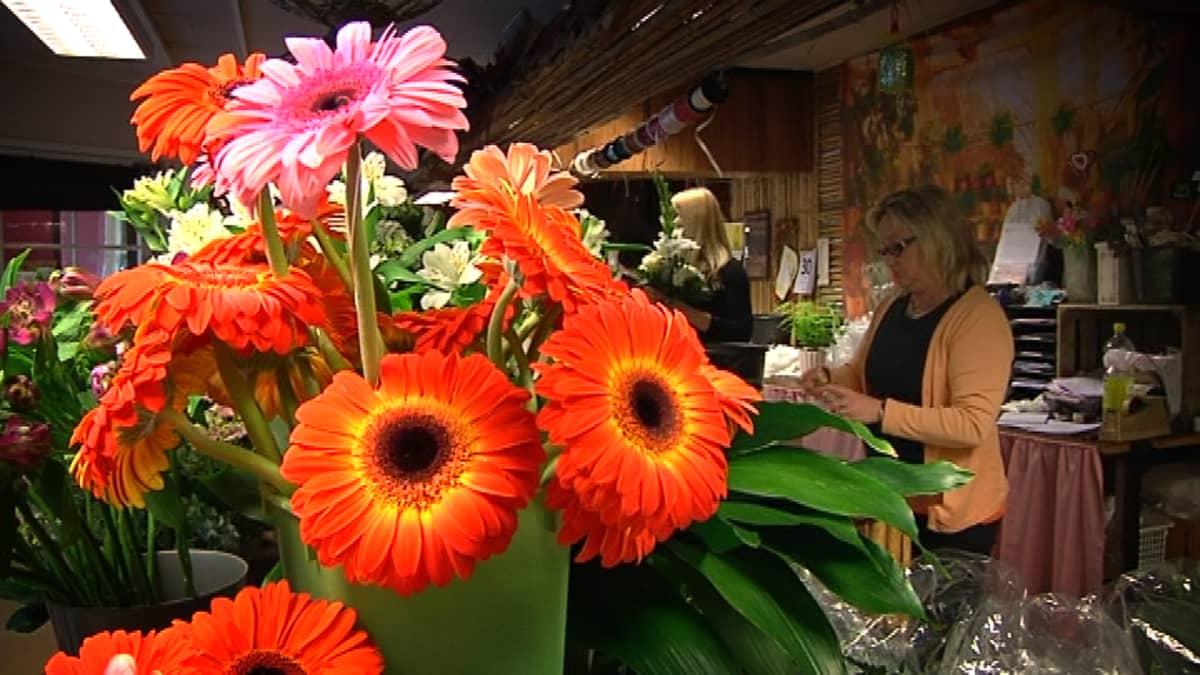 Gerberakimppu kukkakaupassa.