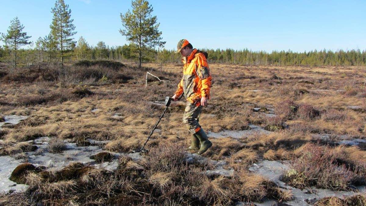 Kuvassa Soini Hotakainen käyttää metallinilmaisijnta suolla.