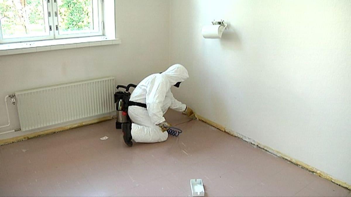 Tuholaistorjuja myrkyttää seinän rakoa.
