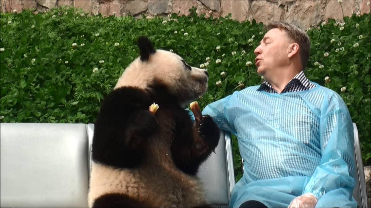 Panda ja Heikki Kontiosalo neuvottelevat Ranualle tulosta.