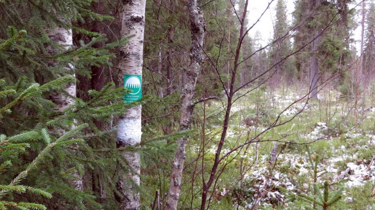 Koivun kyljessä merkki suojelumetsästä, taustalla erottuu selkeästi luonnontilaisen ja hoidetun metsän raja.