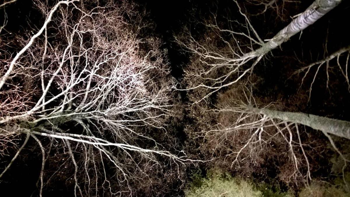Valaistuja puita.