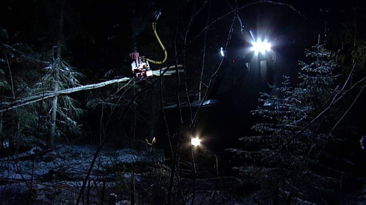 Metsäkone pimeässä metsässä.