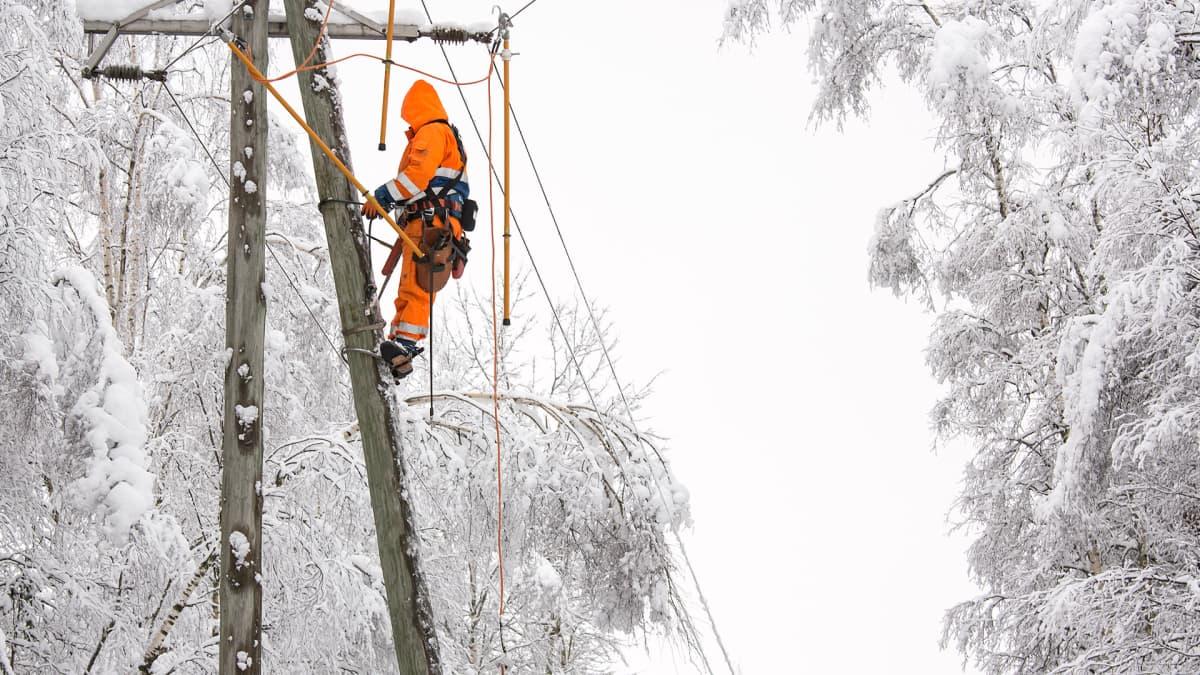 Sähkömies huoltaa linjaa, jonka päälle lumi on painanut oksan.