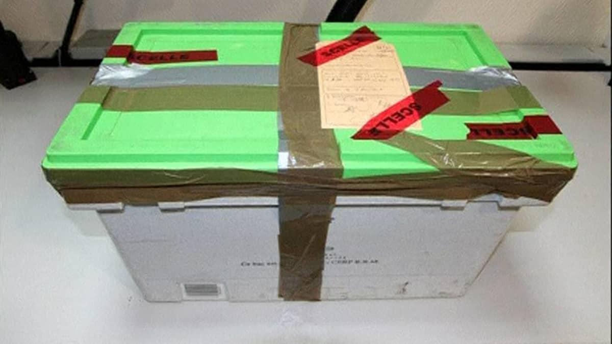 Germanwings lentokoneen musta laatikko.