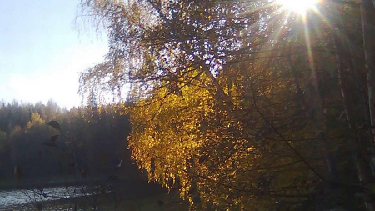 Auringonvalo syksyn puiden välistä.