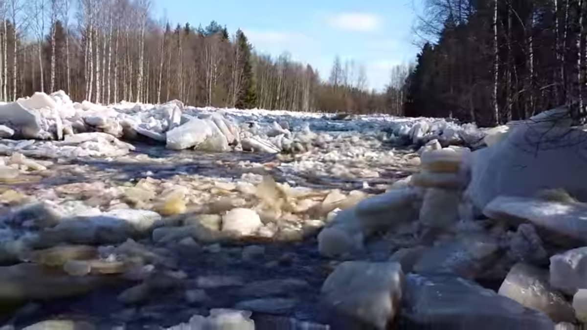 Jääpato Olhavanjoessa