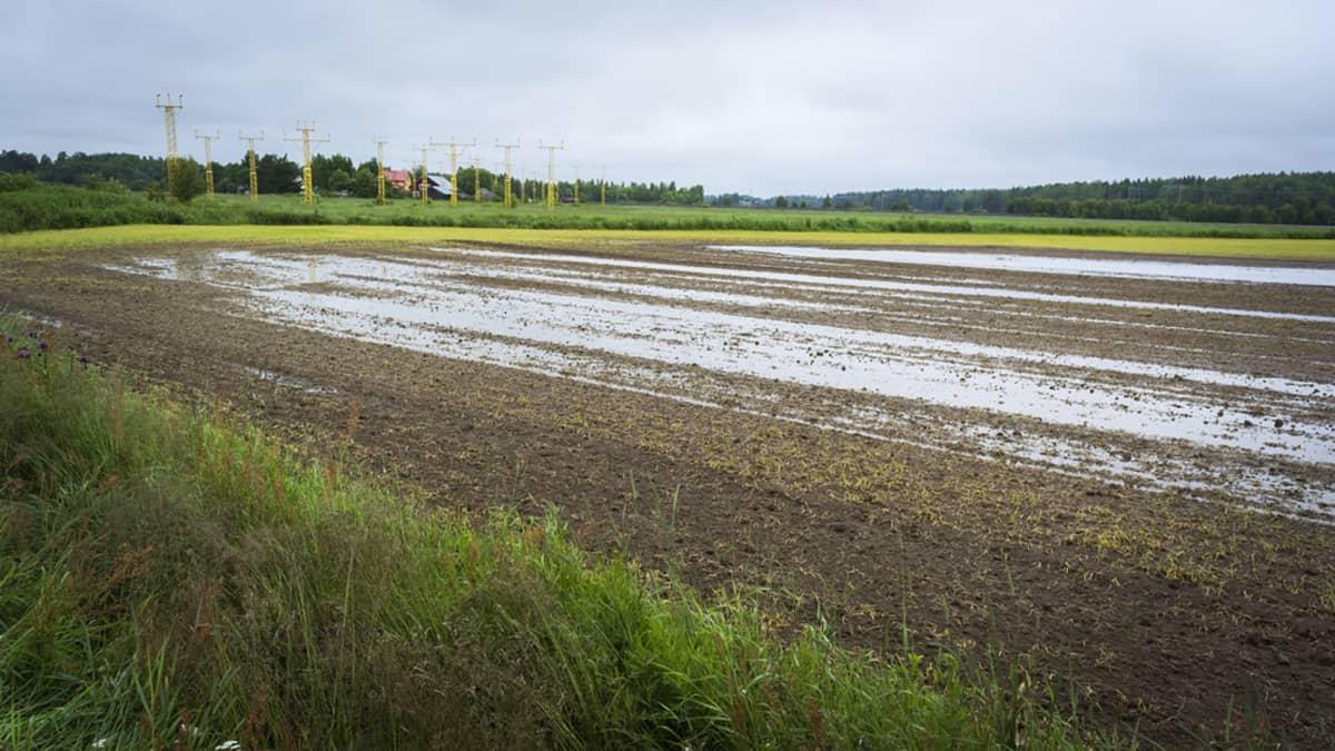Veden vallassa oleva viljelty pelto Vaasassa.