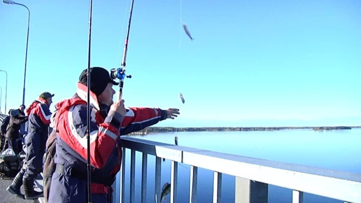 Silakan kalastusta Raippaluodon sillalla.
