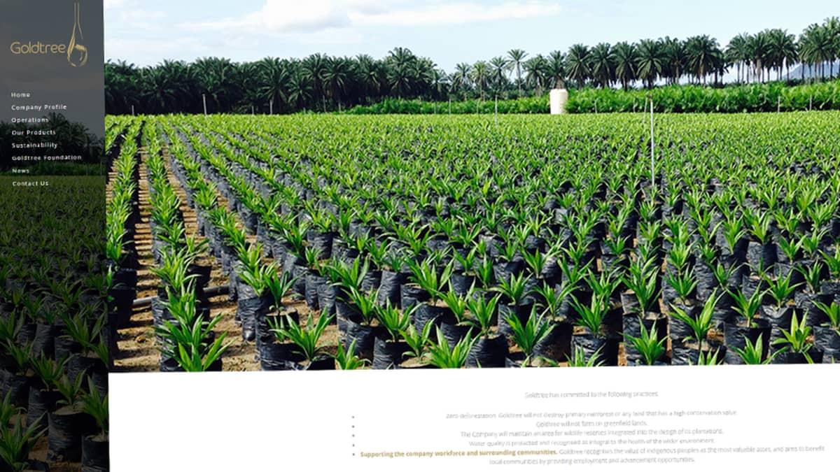 Kuvakaappaus nettisivuilta. Kuvassa on satoja ruukussa kasvavia palmuja.