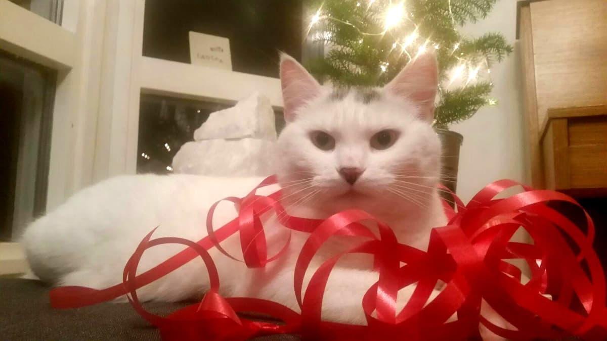 Kissa leikkii lahjanarulla.