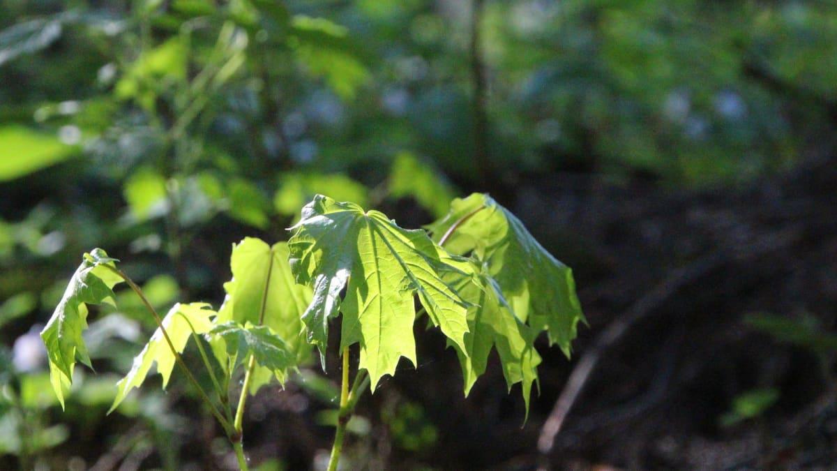 Kasvillisuutta liki 50 hehtaarin Martinpuistossa.