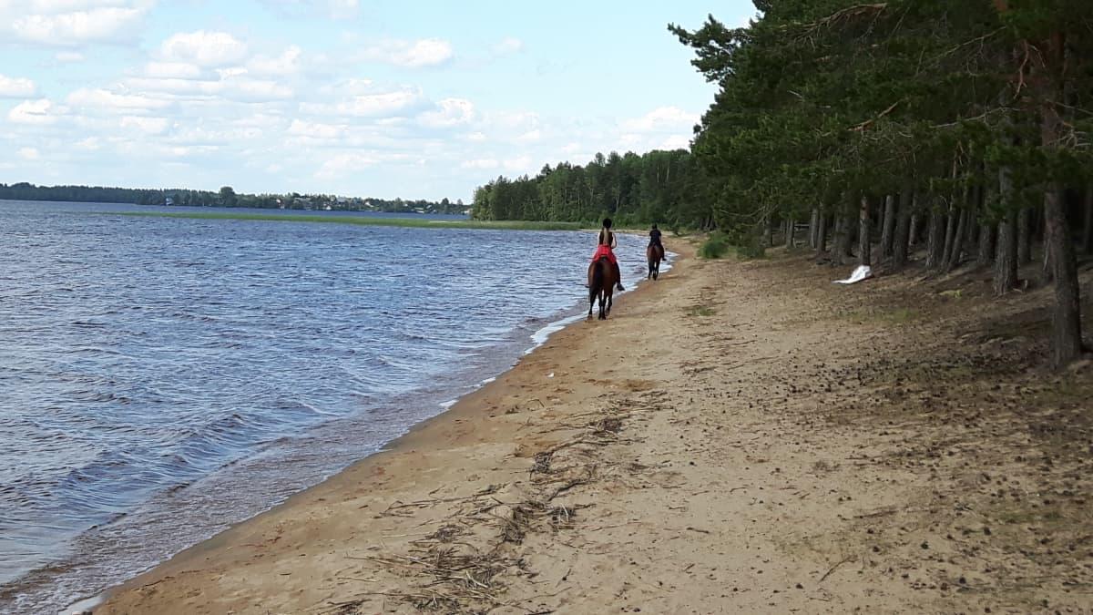 Säämäjärven ranta.