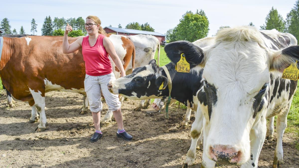 Karjanomistaja hiehojensa keskellä nauravaisena.