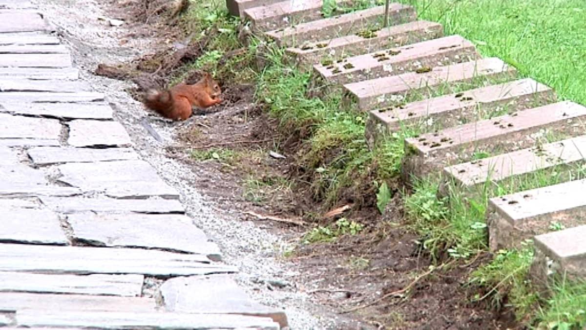 Orava osallistuu sankarihautausmaan remonttiin.