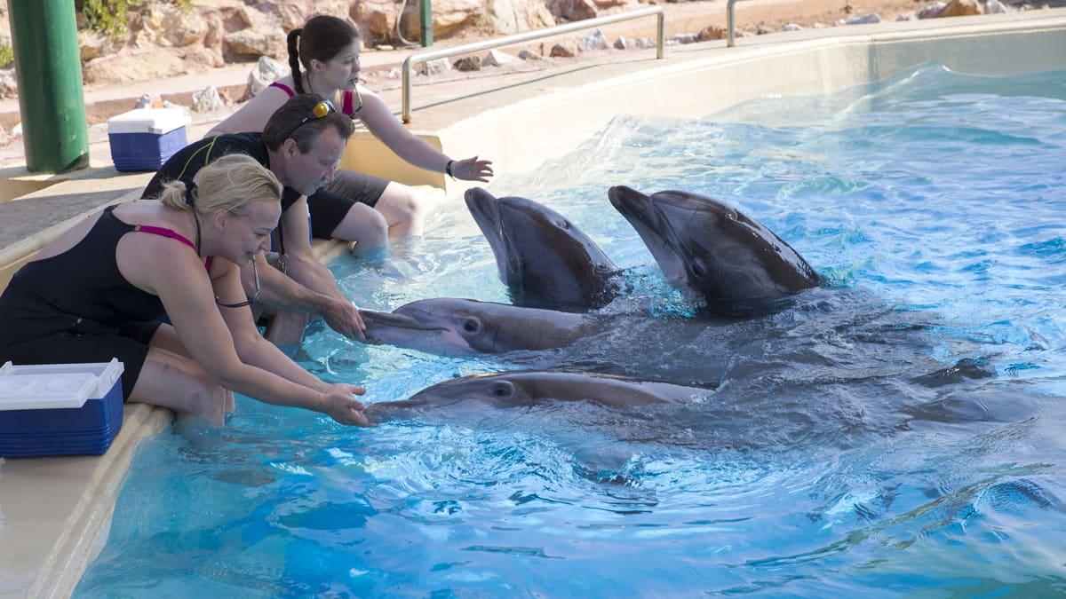 Särkänniemen delfiinit Kreikassa.
