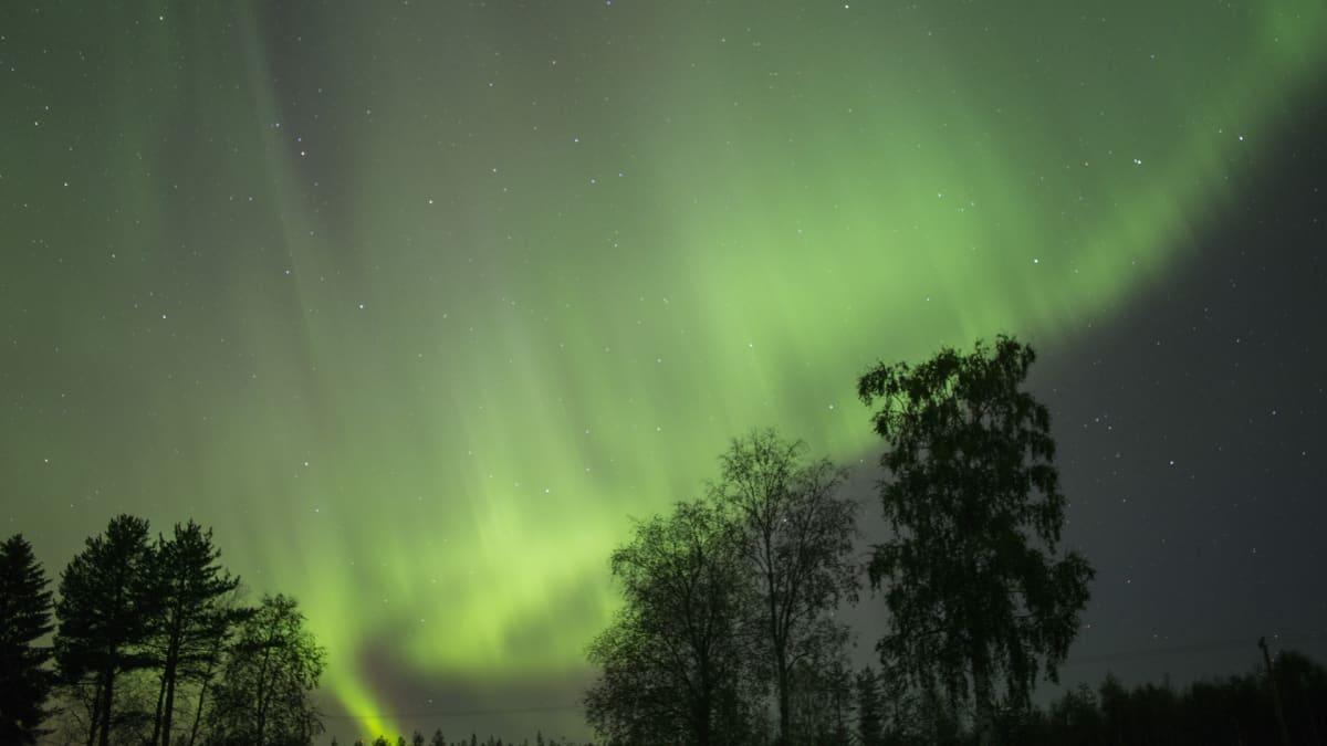Revontulet leimuavat Olkkajärvellä.Revontulet leimuavat Rovaniemen Olkkajärvellä syksyllä 2015.