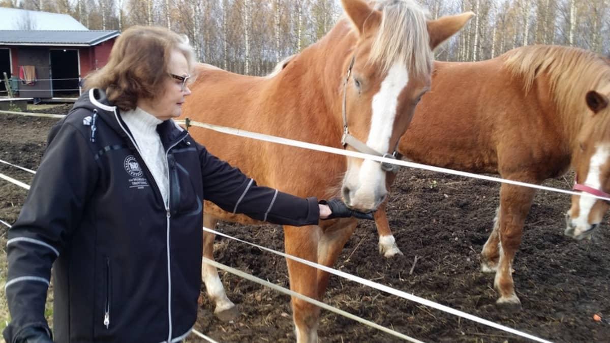 Hilkka Hämäläinen antaa porkkanan suomenhevoselle.