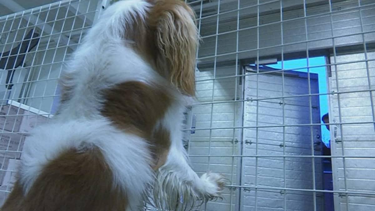 Sulo-koira tuli ensimmäistä kertaa päiväkotiin.