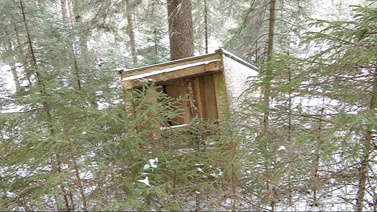 Kaadettu ulkohuussi metsässä.