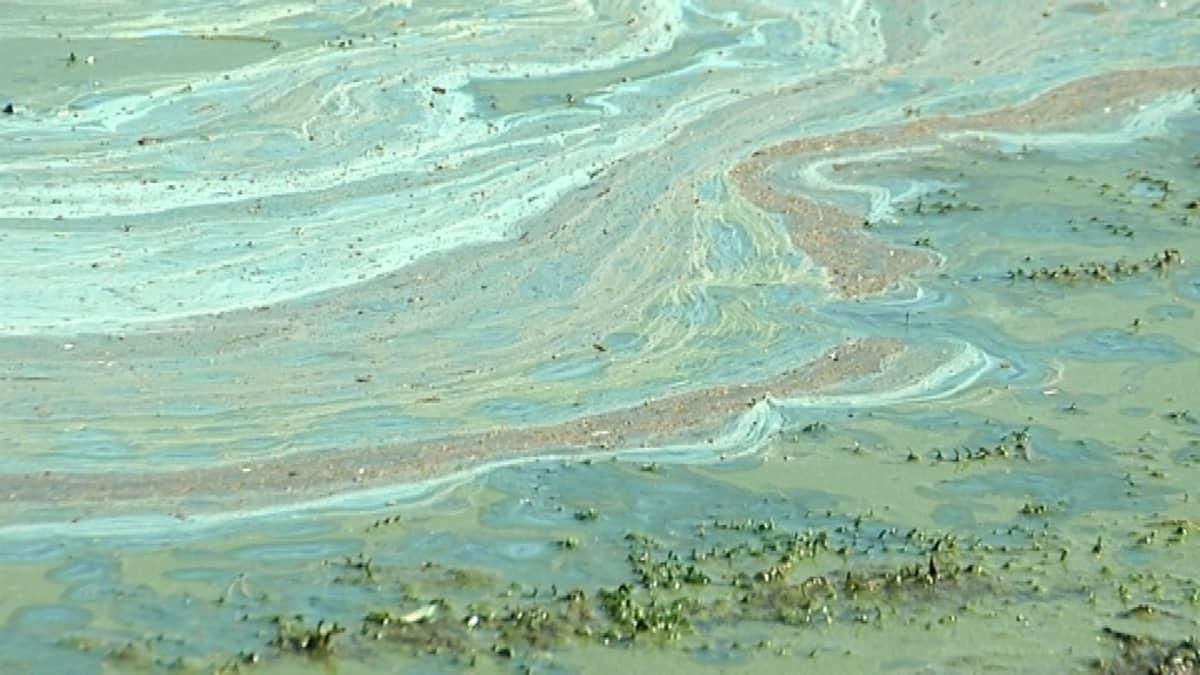 Sinilevää Littoistenjärvellä kesällä 2014