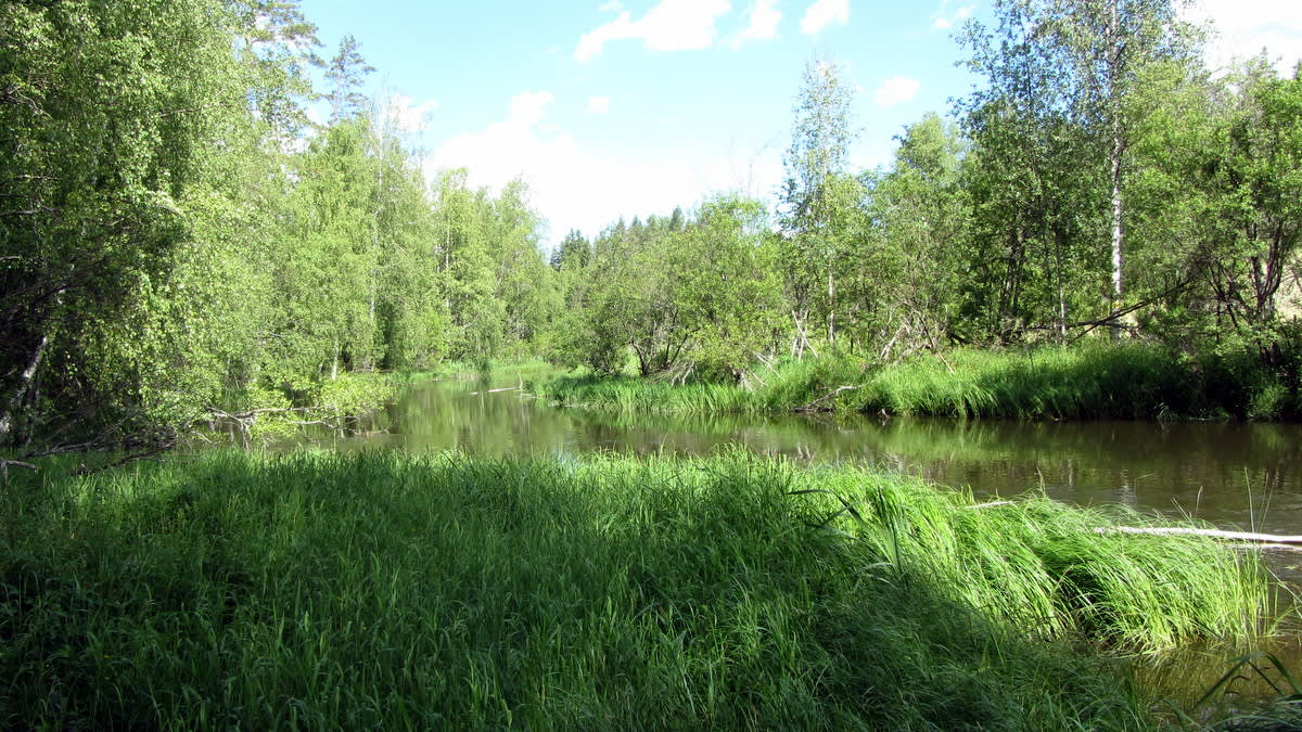 Hiitolanjoki