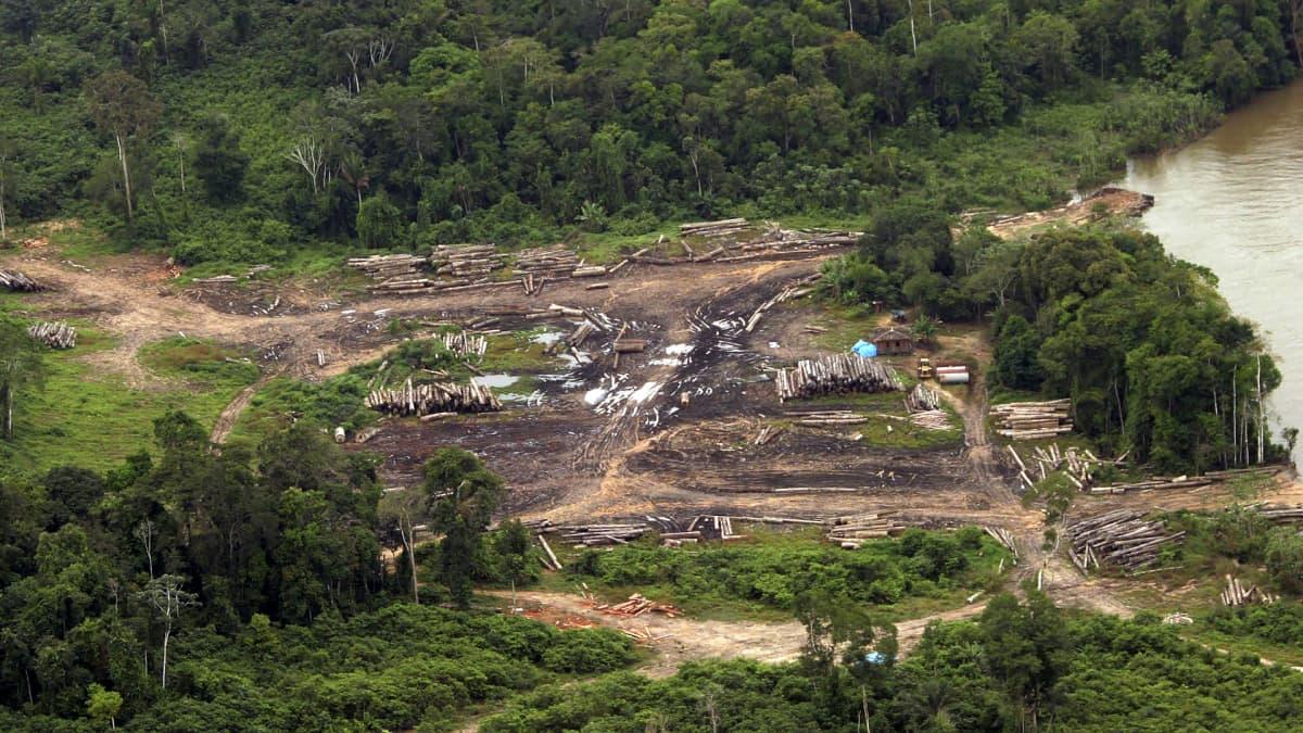 Lainvastaisia hakkuita Amazonaksen alueella Brasiliassa.