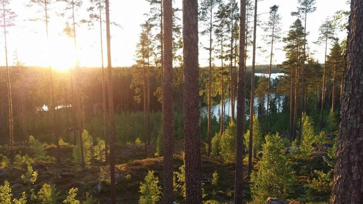 Metsäinen järvimaisema Partaharjulla Pieksämäellä.