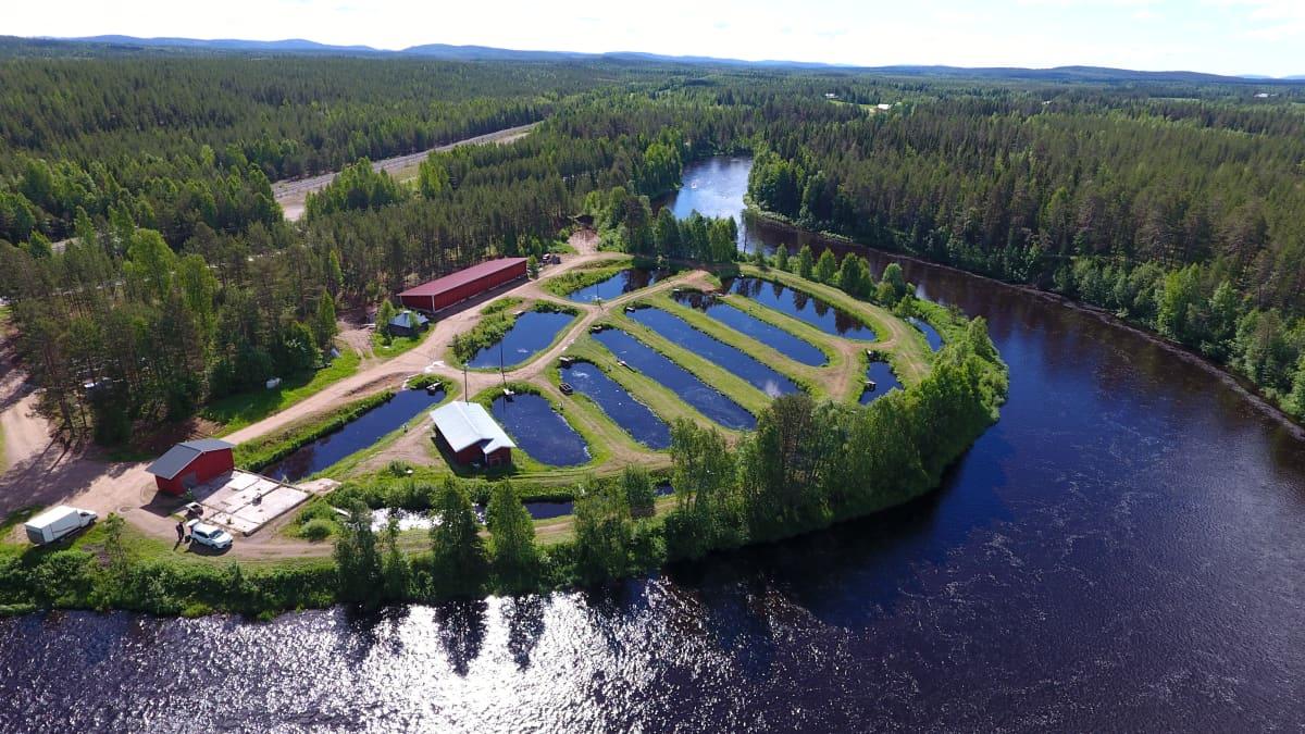 Naamijoella toimii Tornionlaakson Jaloste Ky:n kirjolohenkasvattamo. Naamijoki, Pello 7.7.2017