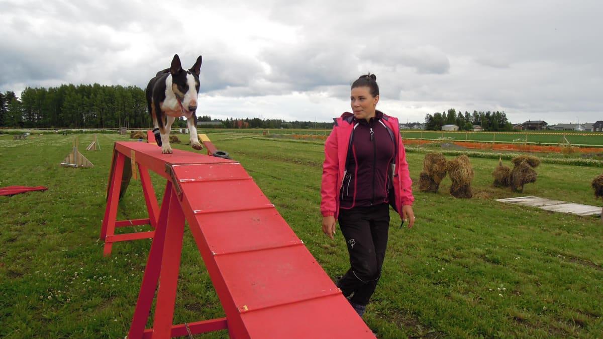 Tiia Kortemaa ja bullterrieri Riesa harrastavat mm. pelastus- ja kaverikoiratoimintaa.