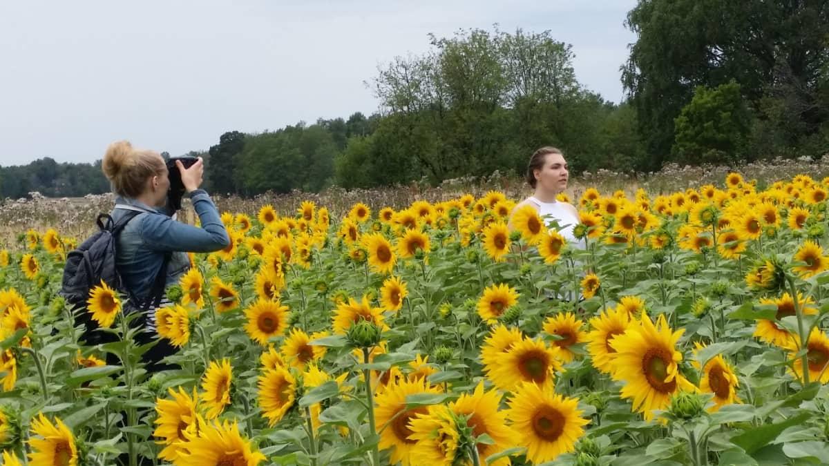Noora Toivosta kuvataan auringonkukkapellossa.