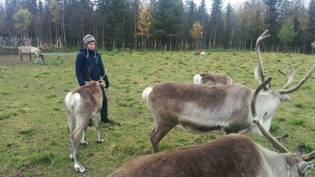 Tuire Kaimio kouluttaa eläinnäyttelijöitä.