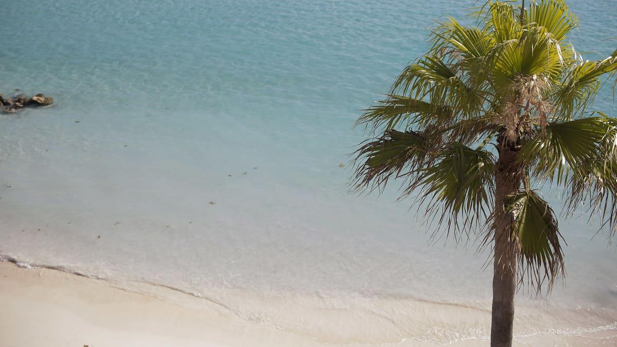palmu Bermudan rannalla.