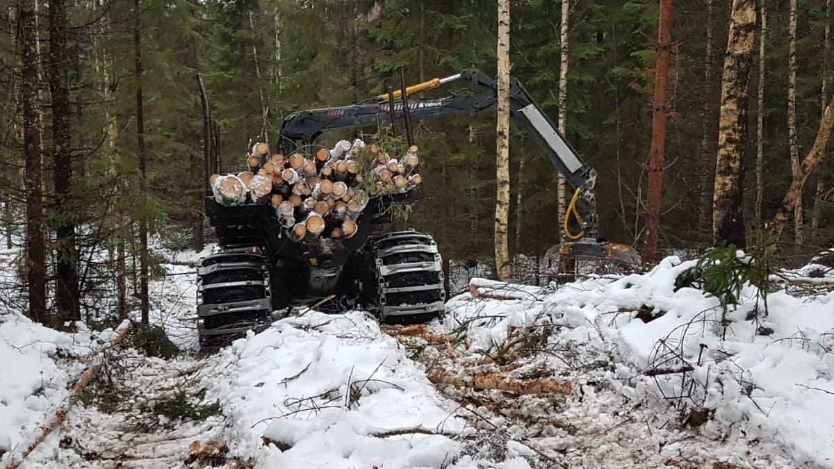 Ajokone metsässä