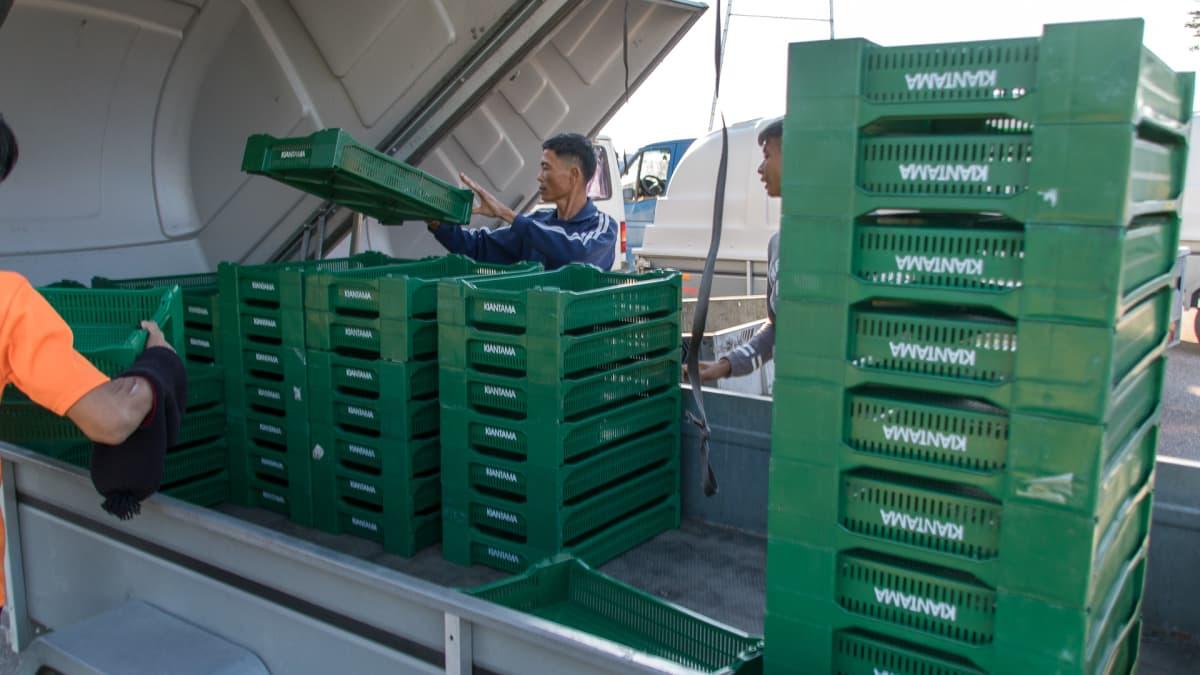 Thai-poimijat lastaavat peräkärryyn marjalavoja