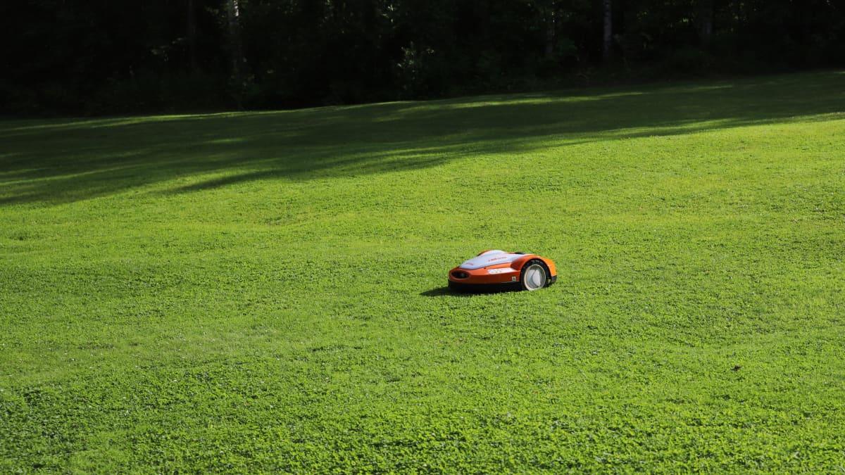 Robottiruohonleikkuri nurmikolla.